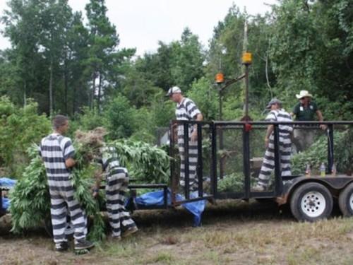 1406598645000-Inmate-pot1